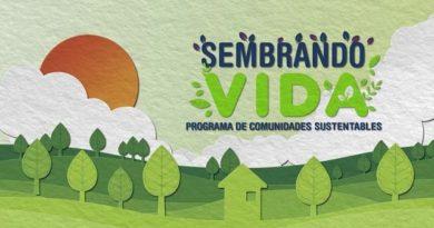 El programa Sembrando Vida promueve la reforestación y restauración productiva